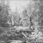 Гніздо ведмедів у Карпатській пущі